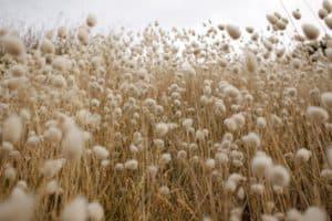 producción textil algodón