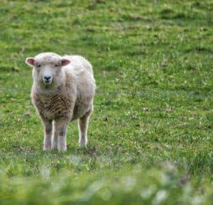 fábrica de tejidos lana