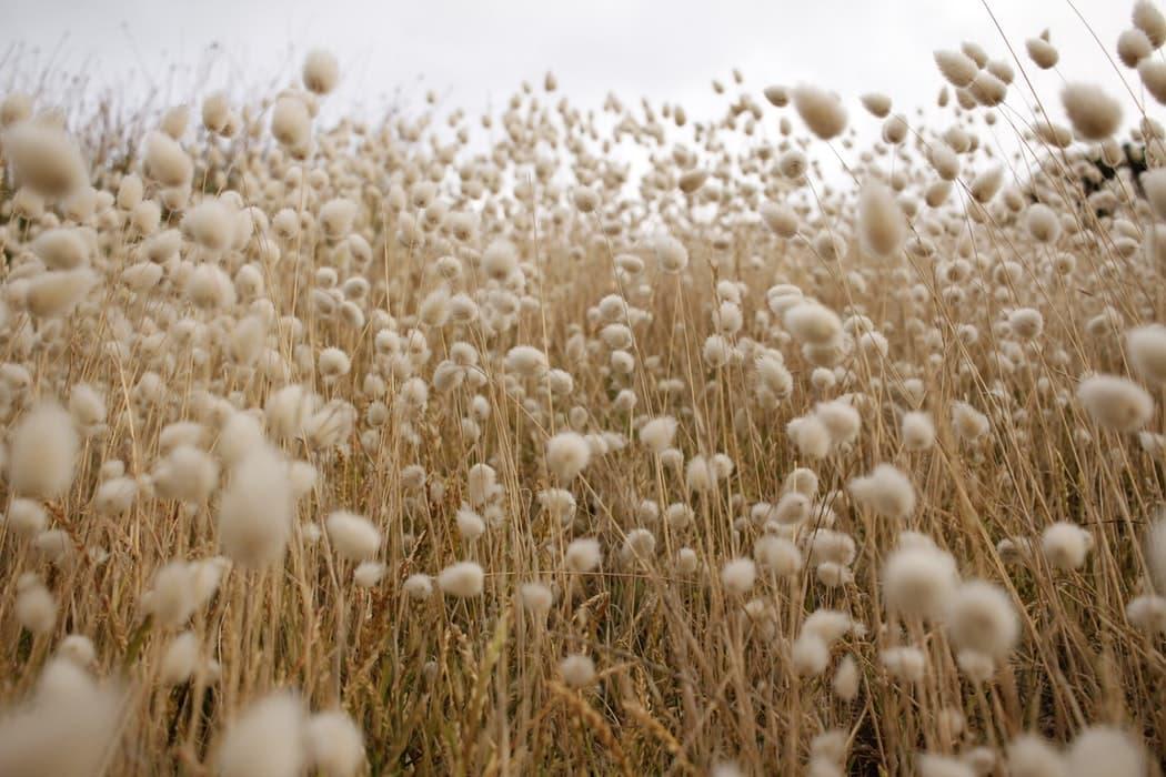 100719 4 ¿Qué materiales se utilizan en la producción textil?