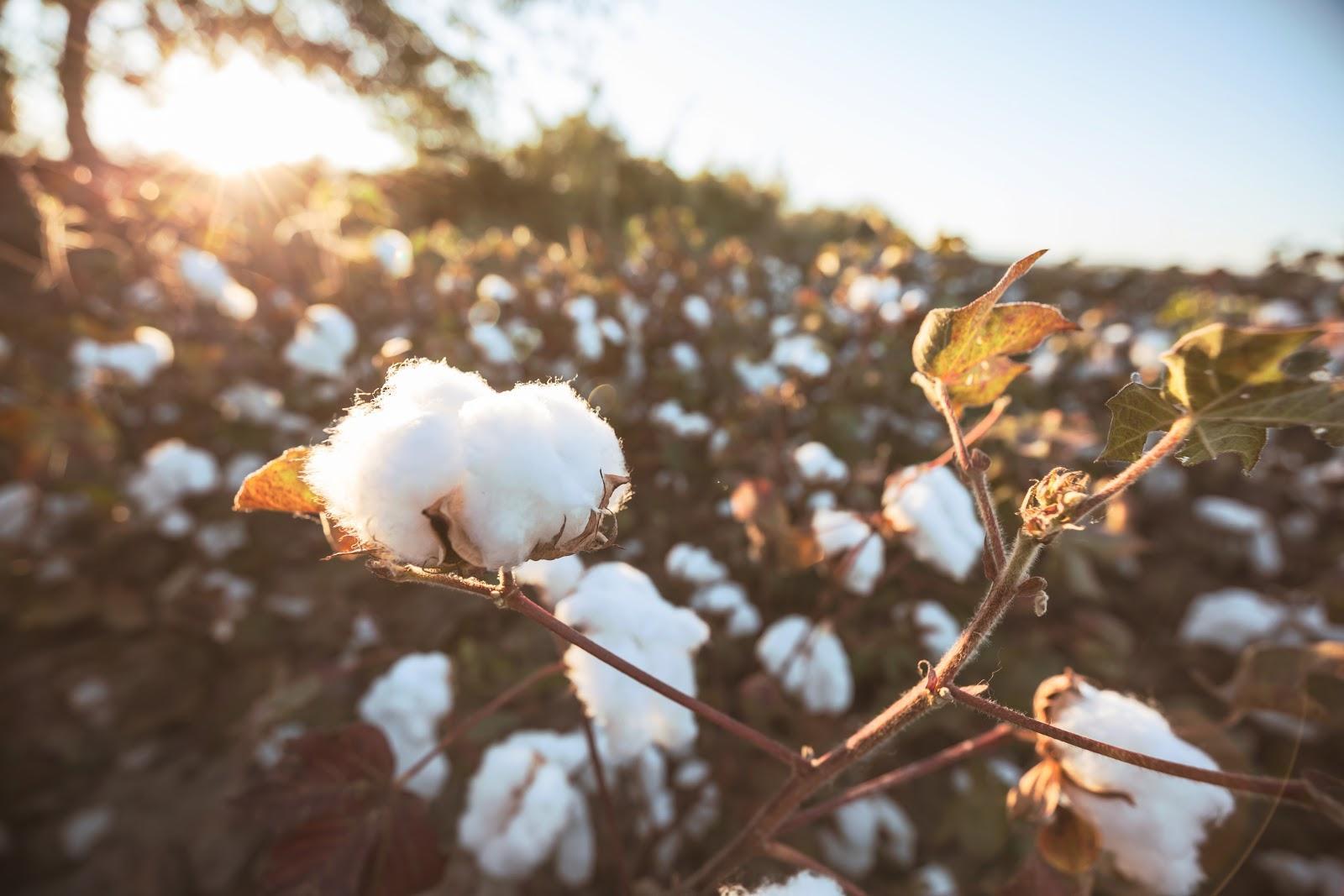 La innovación textil del siglo XXI