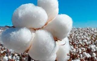 usos del algodon textilbalsareny Tipos de tejidos: tres usos del algodón que no sabías usos del algodón
