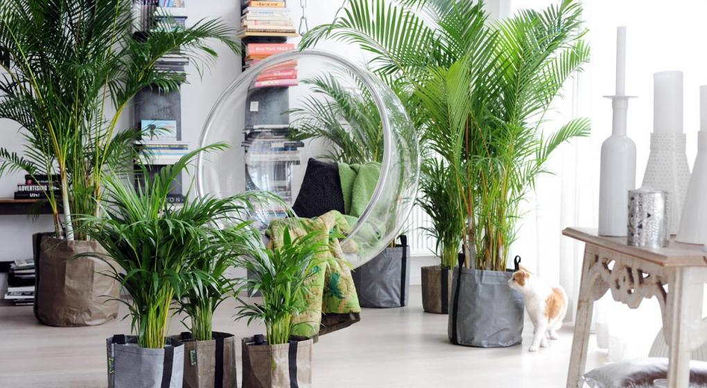 Plantas de interiores 1 Tendencias textiles en 2019: redecora tu hogar